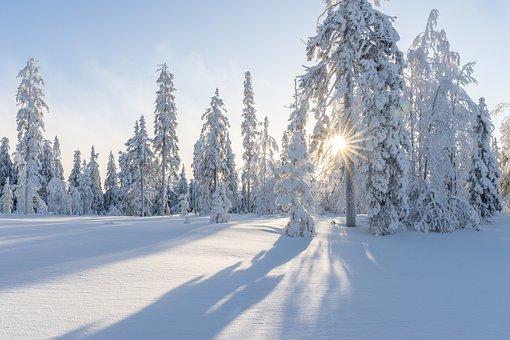 Bäume, Winter, Schnee, Weiß, Kälte