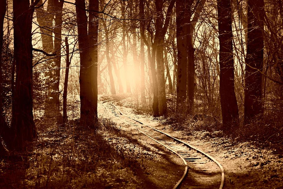 Forest, Tree, Woodland, Rail Track, Path, Park