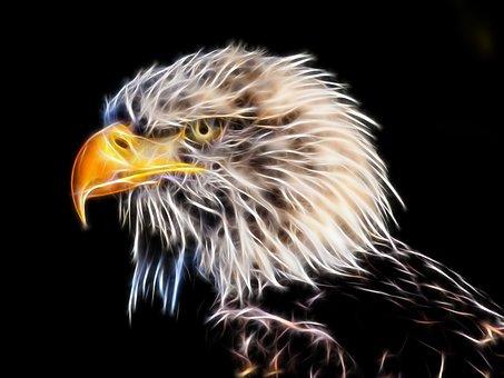 Burung Elang Gambar Unduh Gambar Gambar Gratis Pixabay