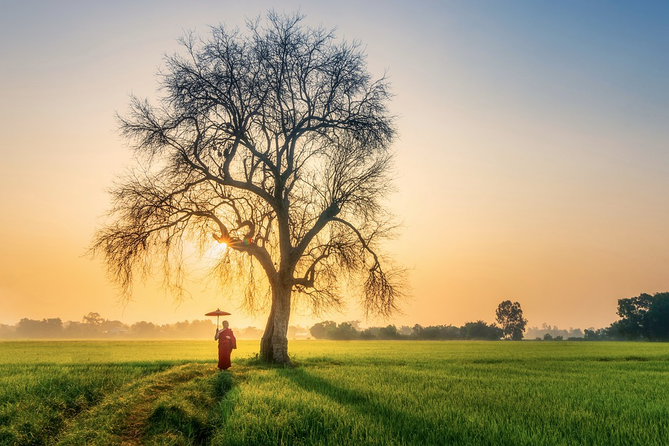 Monk, Morning, Sun, Old Tree, Countryside, Sunstar