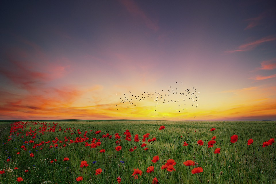 Landscape, Poppies, Spring, Sunset, Sky, Clouds