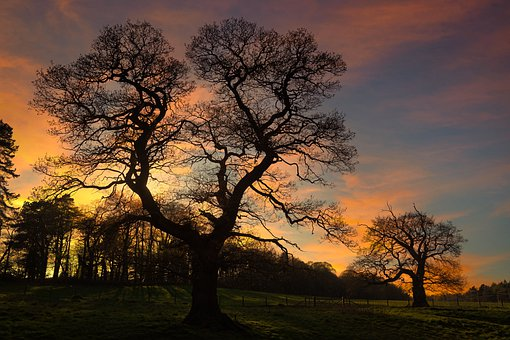 Trees, Silhouettes, Evening Sky, Nature