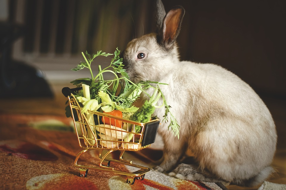 Dwarf Rabbit, Color Dwarf, Shopping Cart, Vegetables