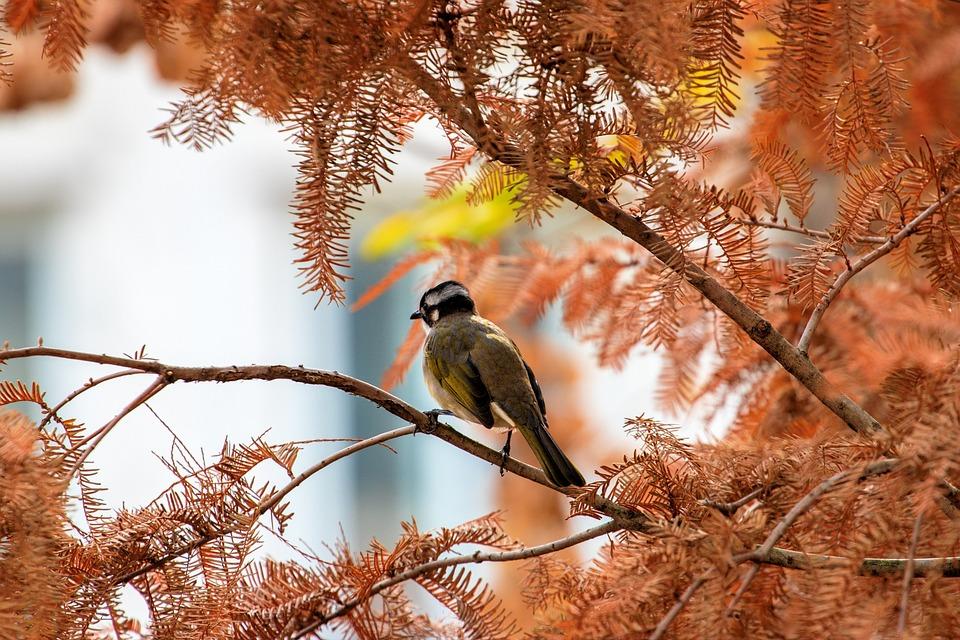 https://cdn.pixabay.com/photo/2020/02/14/10/40/bird-4848178_960_720.jpg