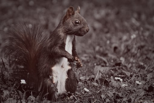 Squirrel, Nager, Cute, Animal, Nature