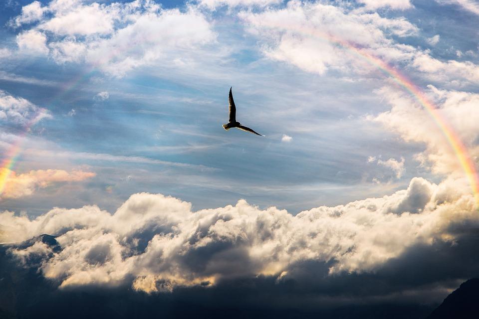 Небето, Птица, Дъга, Настроение, Чайка, Летене