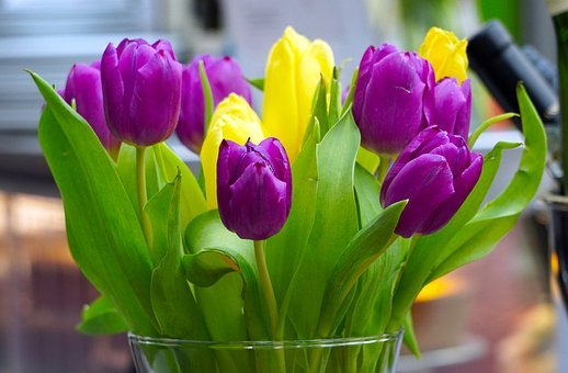 Tulips, Flowers, Spring, Nature, Bouquet