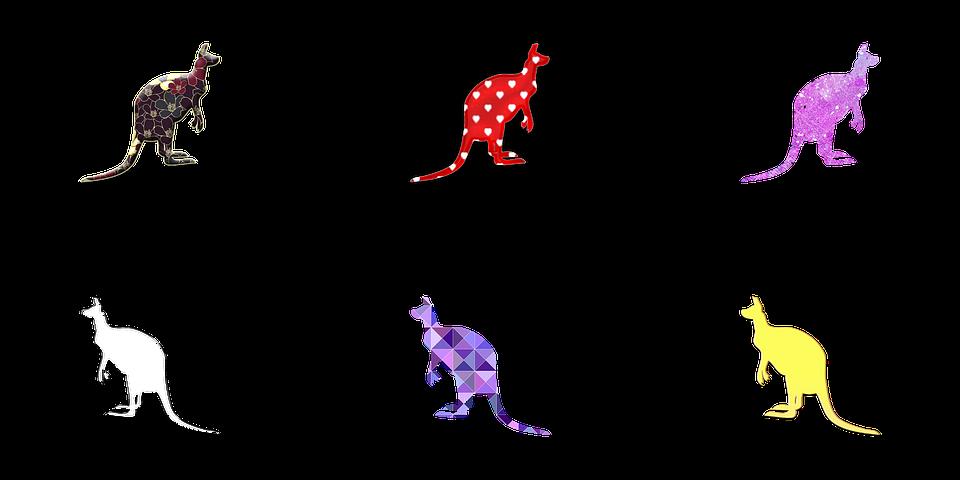 Kangourou Illustration Image Gratuite Sur Pixabay