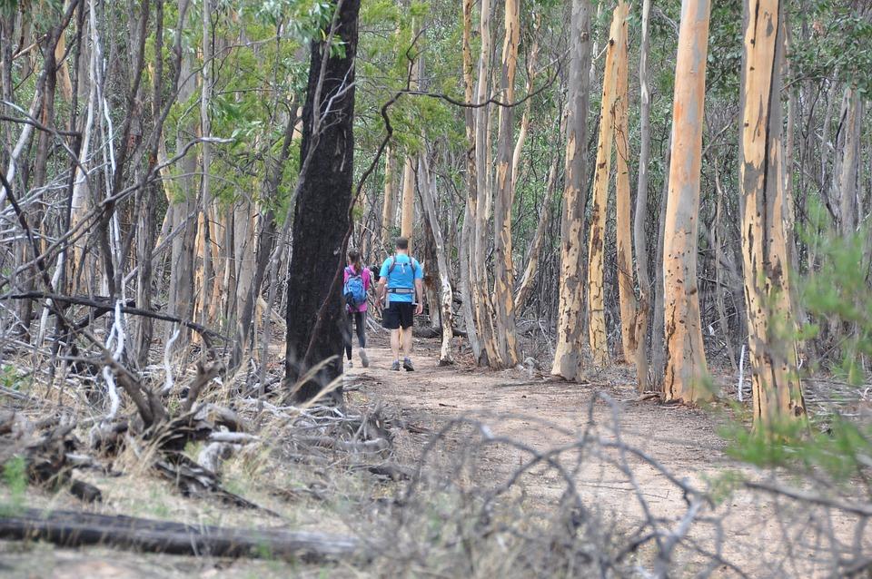 Aansluiting, Een Boswandeling, Natuur, Wandelen, Trail