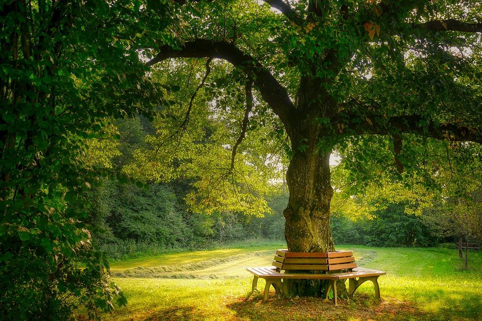 lavička okolo stromu