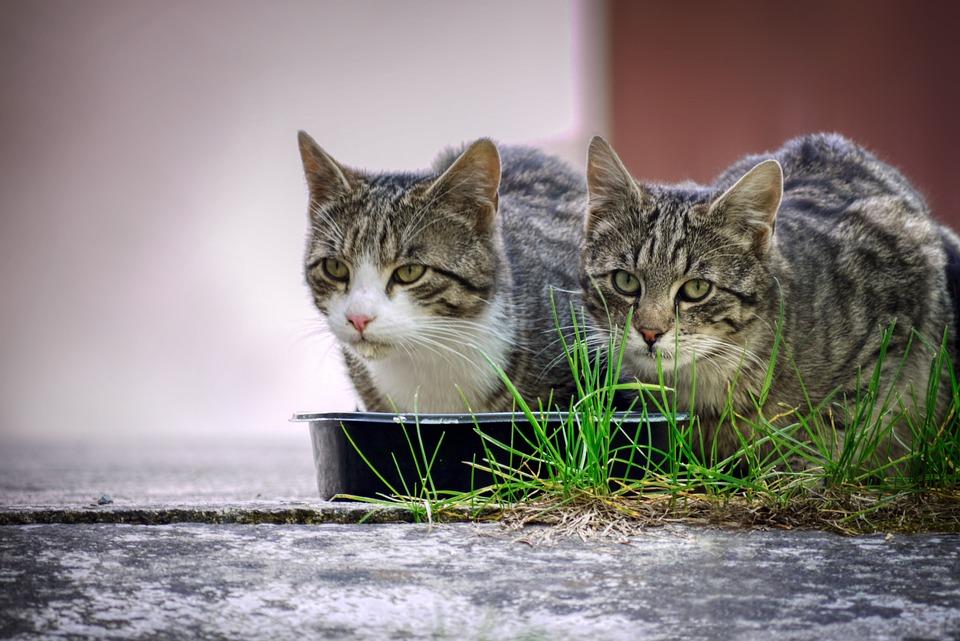 Vrienden, Vriendschap, Kat, Katzenfutter
