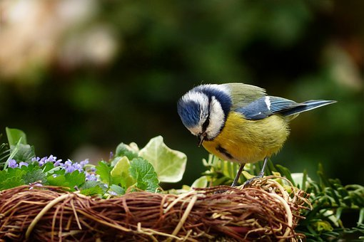 Animal, Bird, Tit, Blue Tit