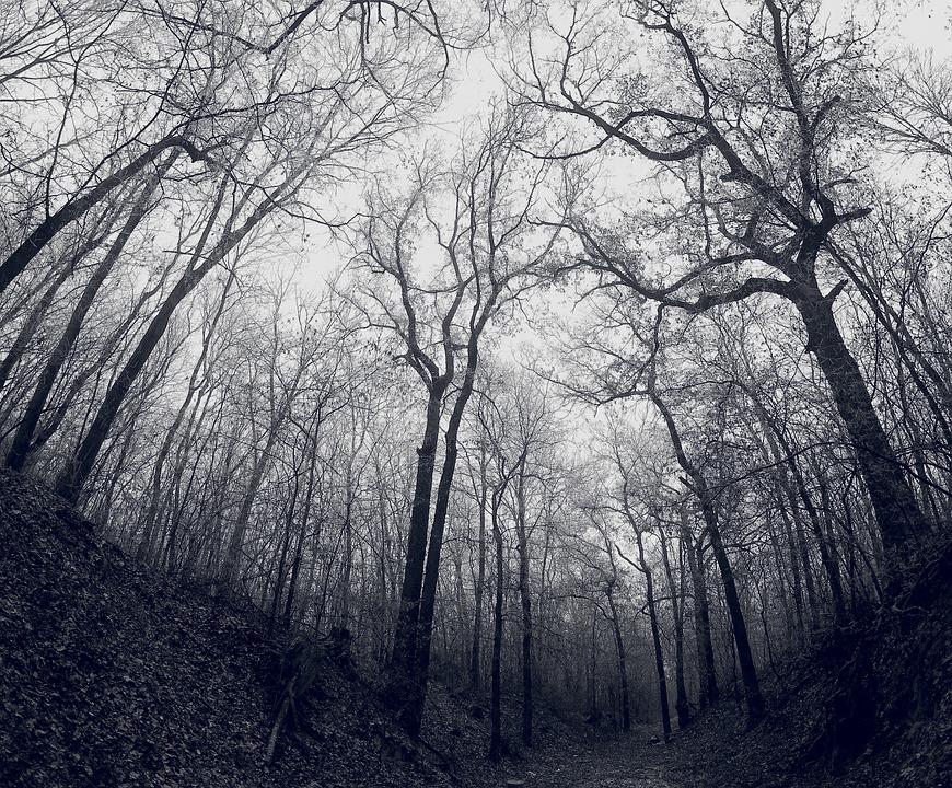 Bosque Oscuro Frio Foto Gratis En Pixabay
