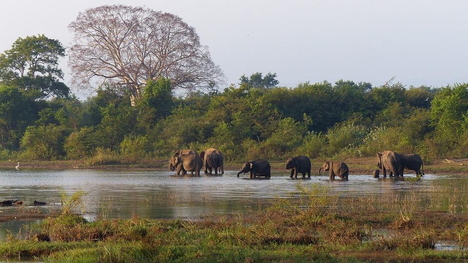Les Éléphants, Salle De Bain, La Faune, Maillot De Bain