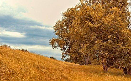 Stromy, Opadavé Stromy, Krajiny, Deprese