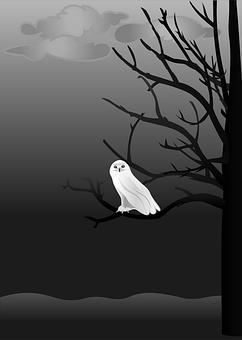 Eule, Gruselig, Nacht, Baum, Himmel