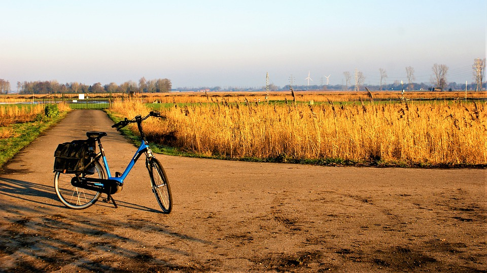 Natuur, Fiets, E-Bike, Landschap, Fietstocht, Riet