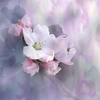 Natur, Landschaft, Blume, Blüte