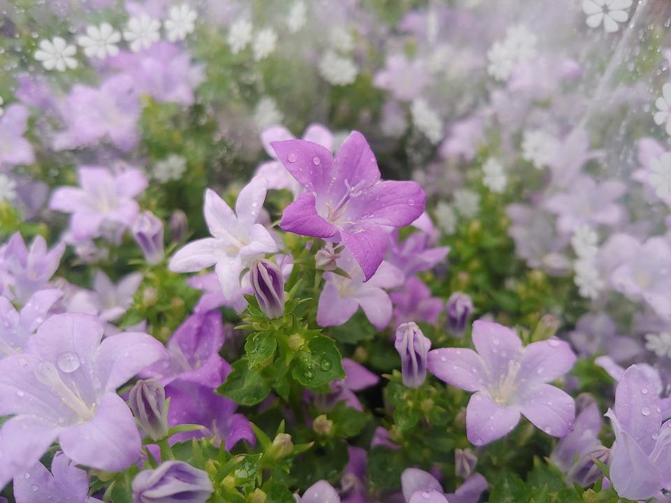 Spring Flowers Plants Free Photo On Pixabay