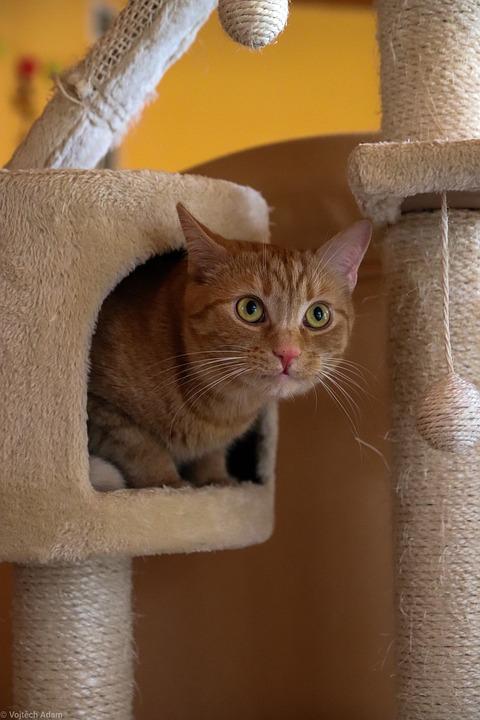 rascadores gatos