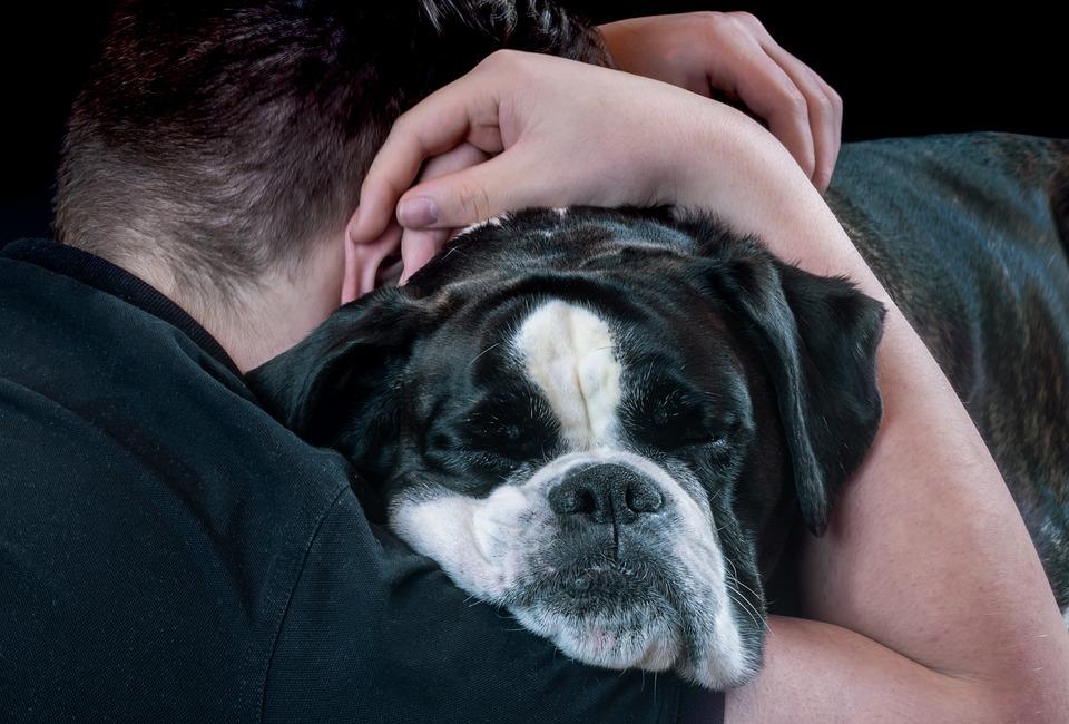Perro, Cara De Perro, Abrazo, Persona, Pobres, Mascotas