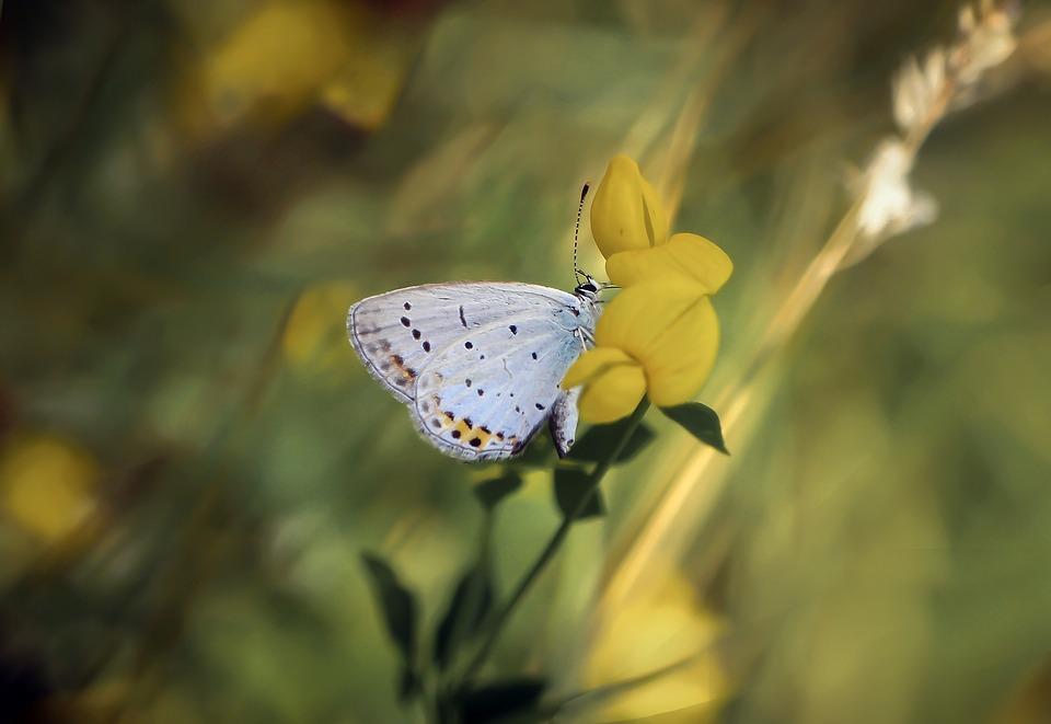 butterfly-4882221_960_720.jpg