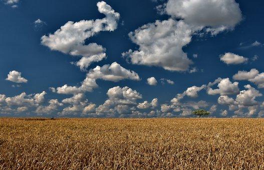 麦田, 谷物, 景观, 夏季, 收获时间, 天空, 云, 云的形成, 耕地