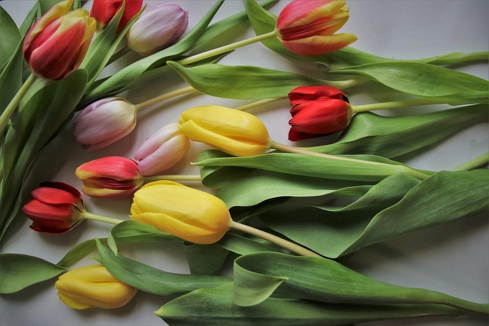 Тюльпаны, Листва, Женский День, Завод, 8 Марта