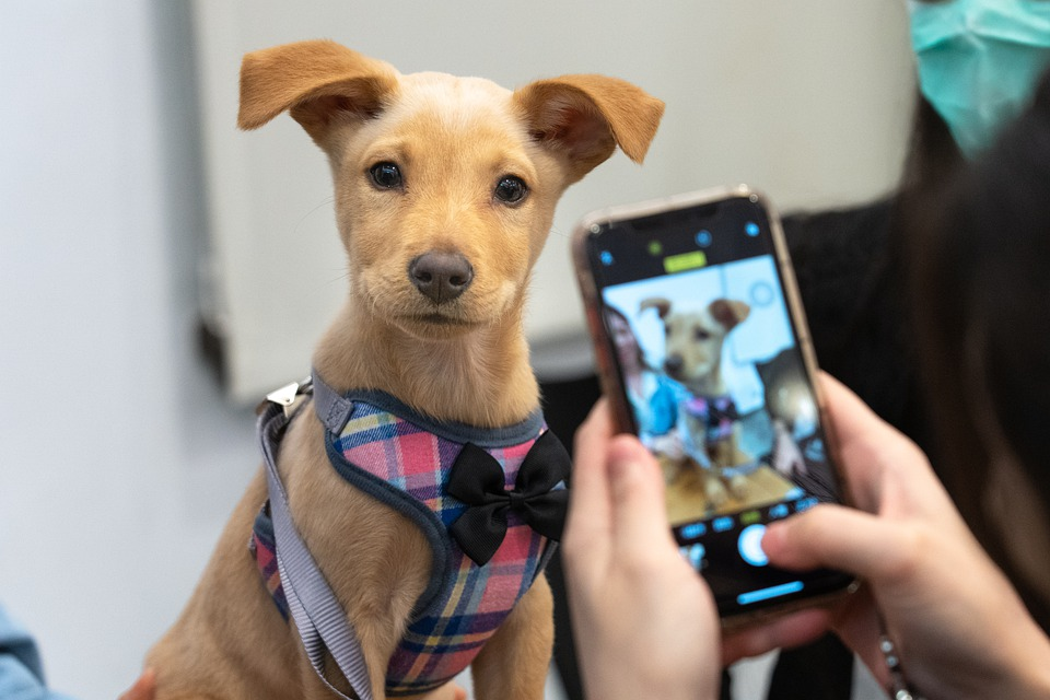 get the word out about animal shelter dogs