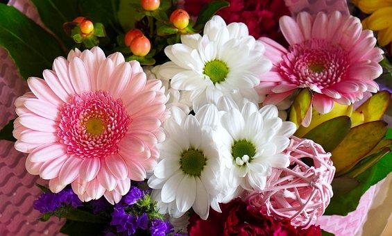 Gerbera, Flowers, Blossom, Bloom, Pink
