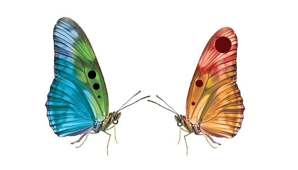 Butterfly, Insekt, Vingar, Lepidoptera, Färg, Snygg