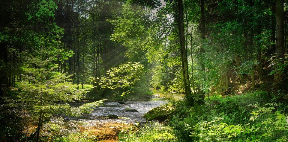 Creek – Pixabay – Fietzfotos