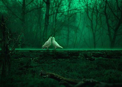 对, 鸽子, 浪漫, 森林, 光, 绿色, 树, 叶, 石头墙, 草, 阴影