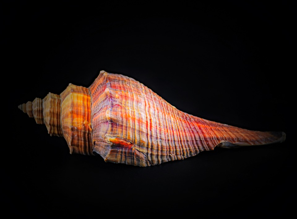 conch shell meaning