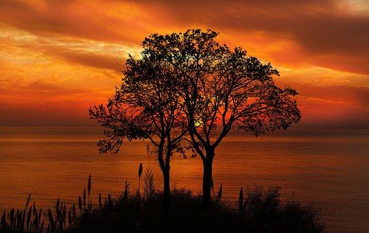 日落, 树, 自然, 景观, 天空, 海滩, 晚上