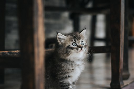 1 000 Free Grey Cat Cat Images Pixabay