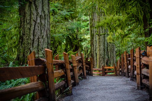 Cathedral Grove, Bc, Vancouver Island
