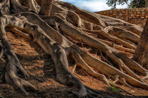 根, 树, 性质, 风景, 光