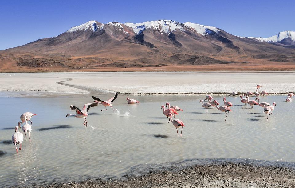 Flamingos, Landscape, Bolivia, Lagoons, Birds, Mountain