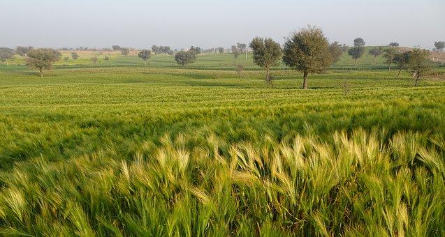 农产品品牌化:未来5年农业发展的最大商机