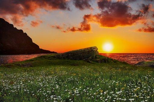 Wiese, Gras, Blumen, Landschaft, Küste