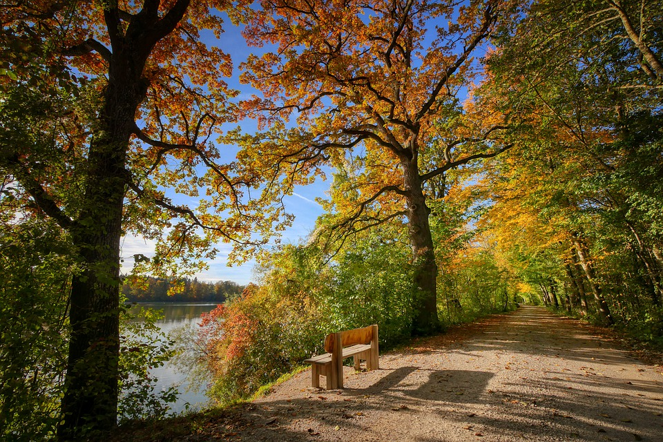 Bank, Away, Rest, River, Lake, Autumn, Fall Foliage