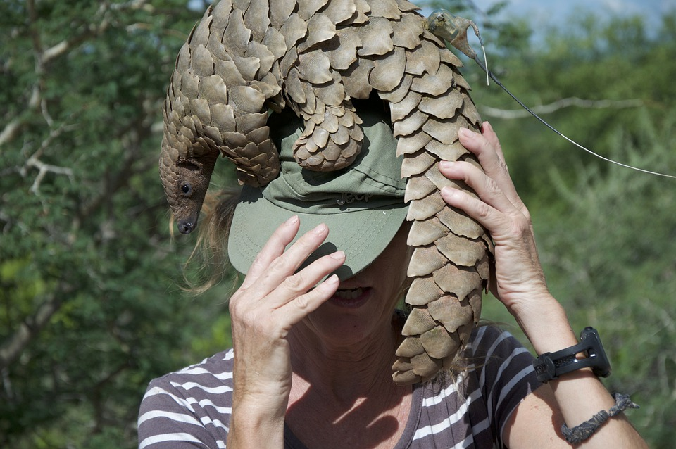Pangolin, Namibie, En Voie De Disparition, Nature