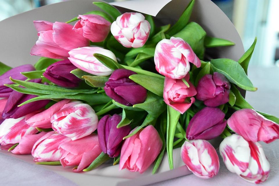 https://cdn.pixabay.com/photo/2020/03/13/11/24/tulips-4927682_960_720.jpg