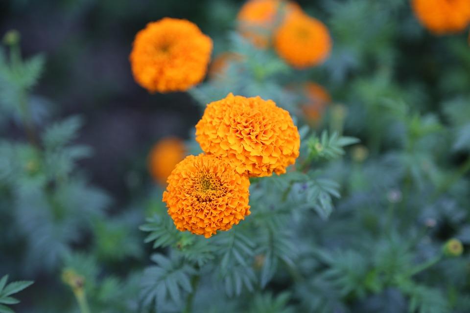 Fleur Fond D Ecran Nature Photo Gratuite Sur Pixabay