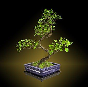 Tree, Nature, Bonsai, Leaves, Black Tree
