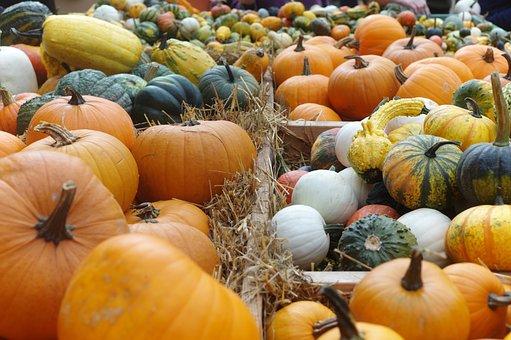 Pumpkins, Pumpkin, The Harvest Festival
