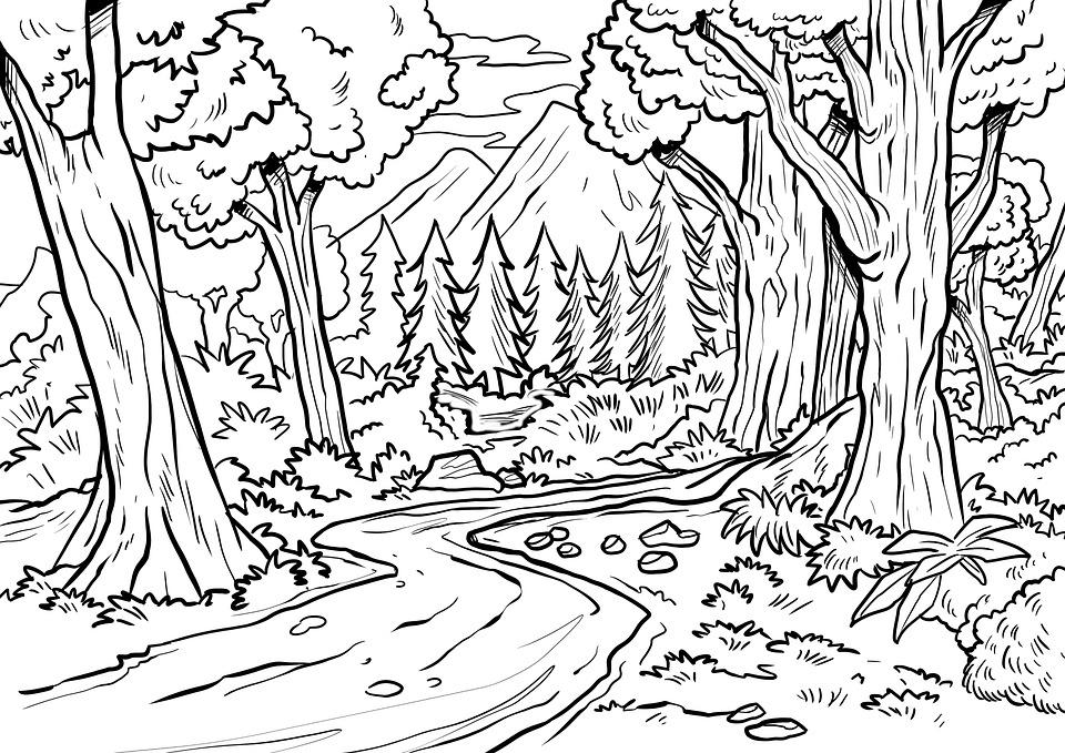 Desenho Floresta Arvores Imagens Gratis No Pixabay