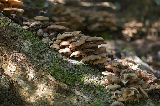 Forest, Nature, Mushroom, Fungi, Moss