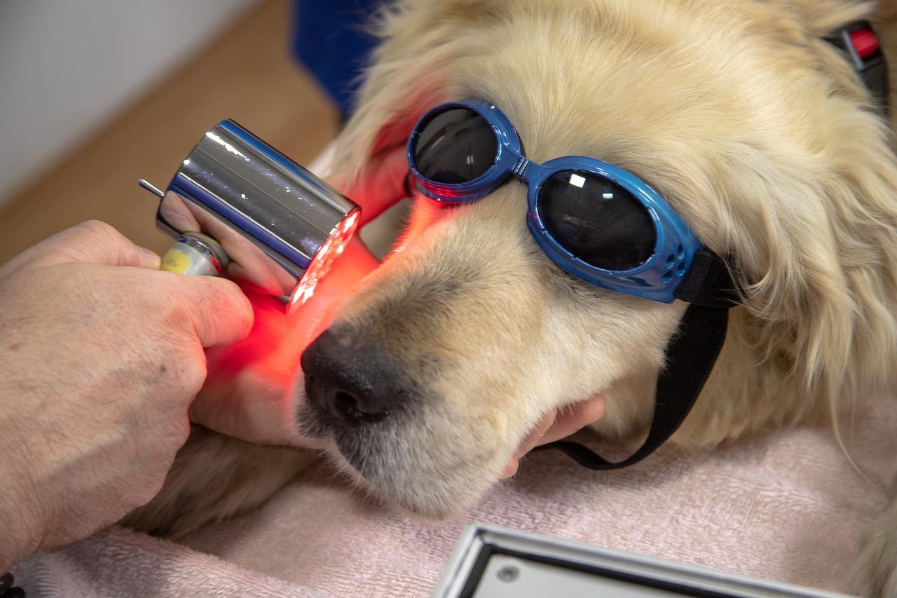 Veterinary laser of dog